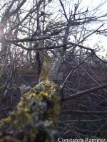 Branch with moss. by BeyondDivine