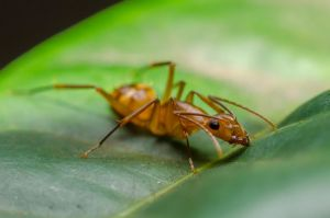 Ant by ssabbath