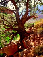 Watchman Trail, Zion National Park, UT by mzager