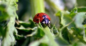 Lady bug! by secludedspace