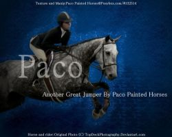 Version 2 Horse pic  Paco by Paco-Taco14