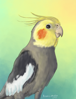 Obi the Cockatiel by Kosmotiel