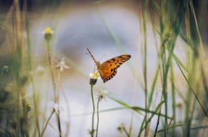 butterfly_1 by michaelbarbosa