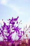Violet Light by Mithertiths