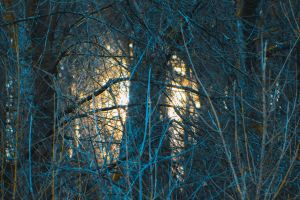 Sun through the forest. by Wuddie06