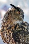 Owl by ShutterBiscuit