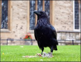 I'm the King of the castle by LordLJCornellPhotos