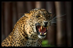 Sariska is angry by morho