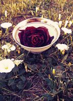 Dead Rose Tea by MariaFeliciano