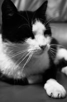 cat Pisi by wollie13