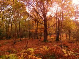 Autumn forest 2 by PhilsPictures