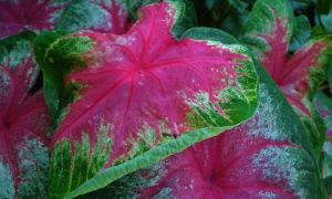 Pink Bush Plant Thing by dananaboo