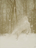 Snow Horse by Kennelwood