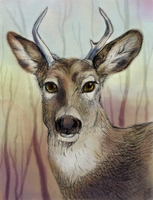 Young Buck Tradigital Sketch by autumnicity