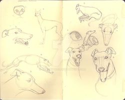Greyhound Sketches 07.08 by crushing83