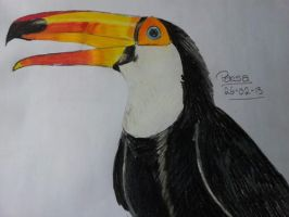 Toucan by dailybunny