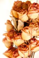 Dried Rose Bouquet by LDFranklin