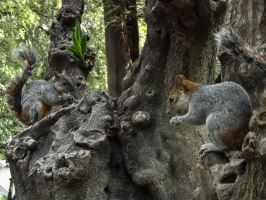 squirrels by danydarkfolkblues