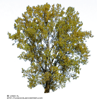 -LindaM Baum Tree 004 by likeisow