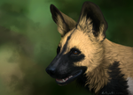 African Wild Dog by Hymnsie