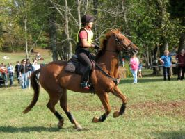 Chestnut Eventing Horse: Stock by JJQ-Stock