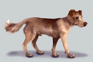A filler doggie by clotus