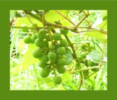 Grapes by Draconian-Doxology