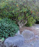 Stock: Tree With Stones by Stock-By-Michelle