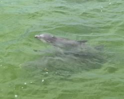 Mother and Baby Dolphin 2 by Lauren-Lee