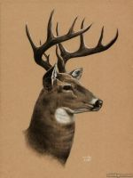 Big Buck by MistiqueStudio