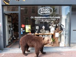 taxidermy, mounted bear! by Museumwinkel
