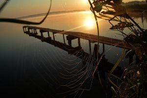 web at sunrise by focus1980