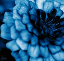 Blue Flower by Rawr-Om-Nom-Nom