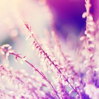 floral dreaming III. by magnesina