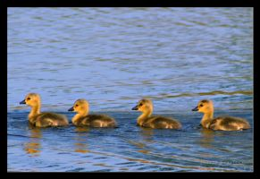 Ducks in a Row by mojorison