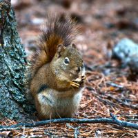 HDR Squirrel by Jordan2002