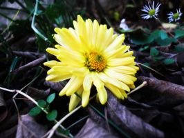 Yellow lustrum by DianaVVolf