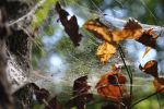 Spider's Web by DiasukeD