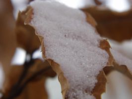 Snowy leaves by kaceymears