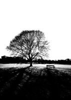 Park Bench by nectar666