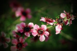 Blossoms 1 by Vividlight