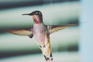 Beautiful Hummer Up Close by FQPhotography