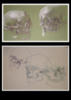 20101124: Skull Study by AngelicRoyalty