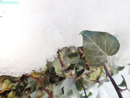 cold leaves by IamNasher