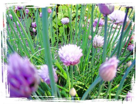 chive by remAy