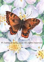 ACEO Wild Rose and Butterfly by JoannaBromley