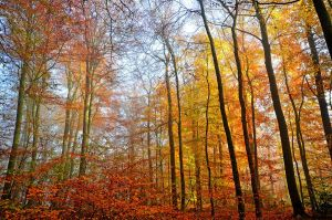 november forest by augenweide
