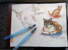Cat sketches by Chiilla