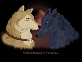 Wolfy Love by AstaraCheetah