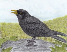 Just a Blackbird by PhilipHarvey
